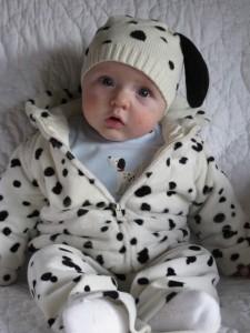 Newborn Dalmatian Costume